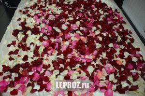 bed and petals